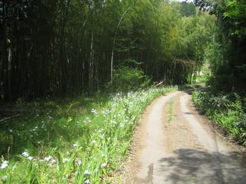 シャガの道